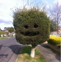 Love this! Bush Smiley.