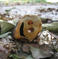 Old Dried Up Lemon Smiley Takes a Nap.