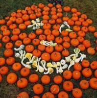 Gourd-eous Jack-o-lantern