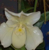 Bunny Wabbit Smiley Orchid