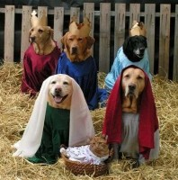 Wacky Nativity, 1 of many!