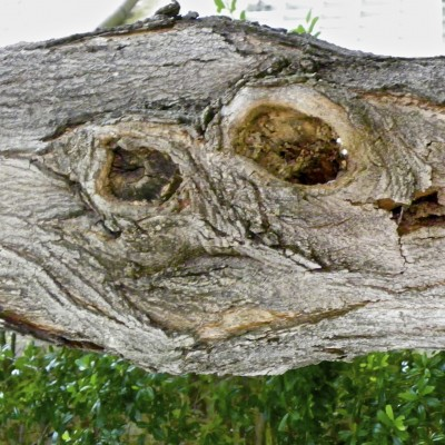 Tree Trunk #Smiley #SmileyFace