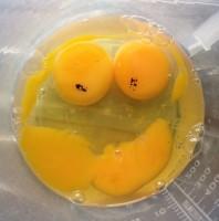 Egg #Smiley #SmileyFace