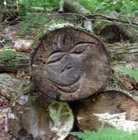 Fallen Tree #Smiley #SmileyFace