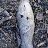 Root Smiley