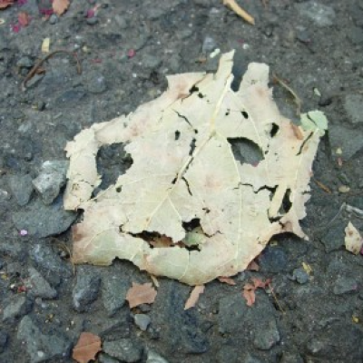 Leaf Smiley