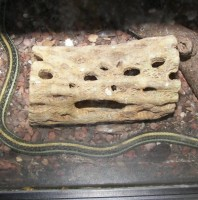 Snake House Smiley
