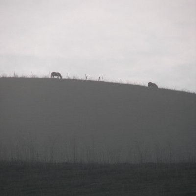 Cows on the Horizon Smiley, #Smiley
