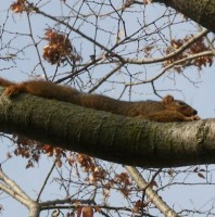 Squirrel Smiley, #Smiley