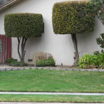 Bushes and Sidewalk Smiley, #Smiley