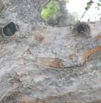 Tree Trunk Smiley, #Smiley