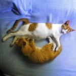 Kitties Smiley