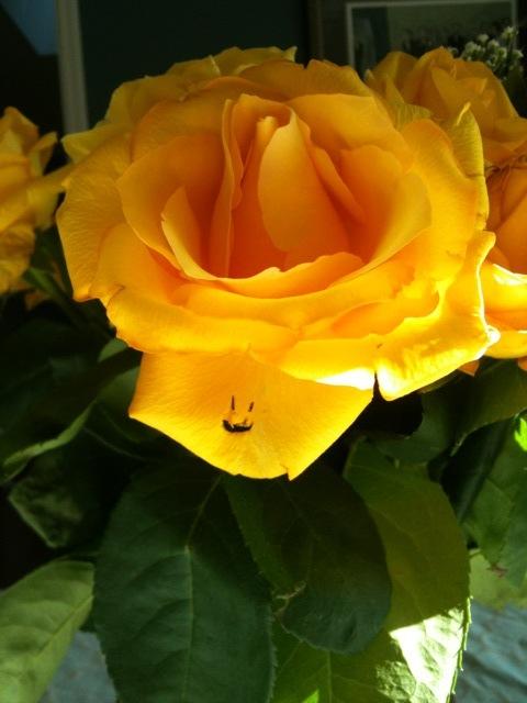 Rose smiley