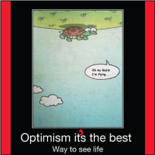 turtle optimist
