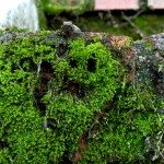 Moss Smiley