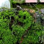 Moss Smiley